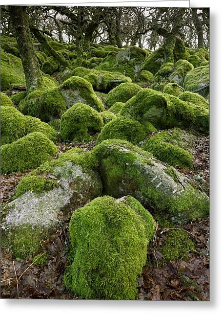 Moss-covered Woodland Greeting Card by Science Photo Library