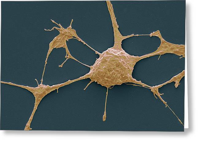 Neurone Greeting Card