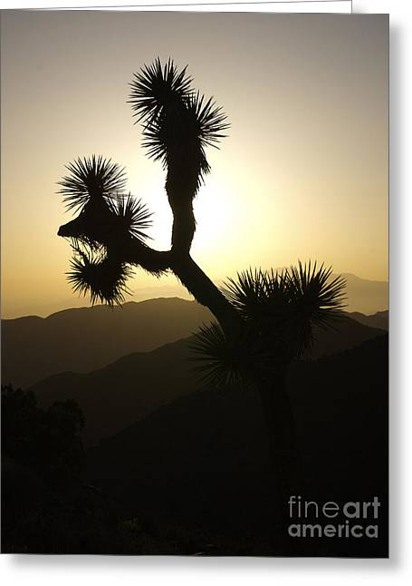New Photographic Art Print For Sale Joshua Tree At Sunset Greeting Card