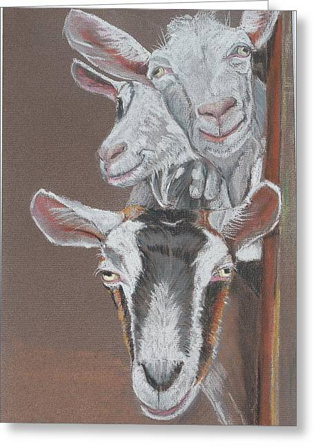 3 Nosey Goats Greeting Card