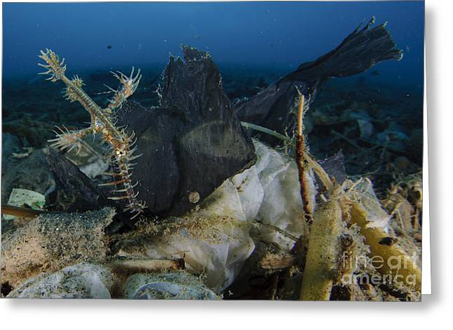 Ornate Ghost Pipefish Amongst Debris Greeting Card by Steve Jones