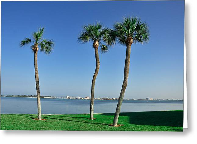 3 Palm Trees And The Sand Key Bridge Greeting Card by Bill Cannon