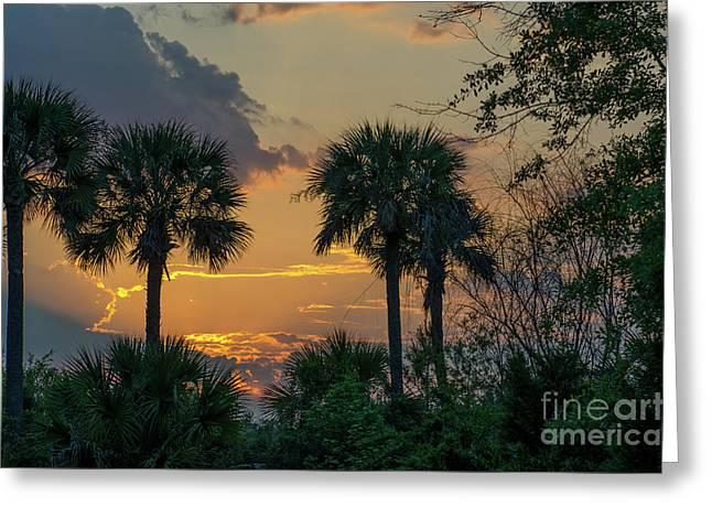 Palmetto Sunset Greeting Card