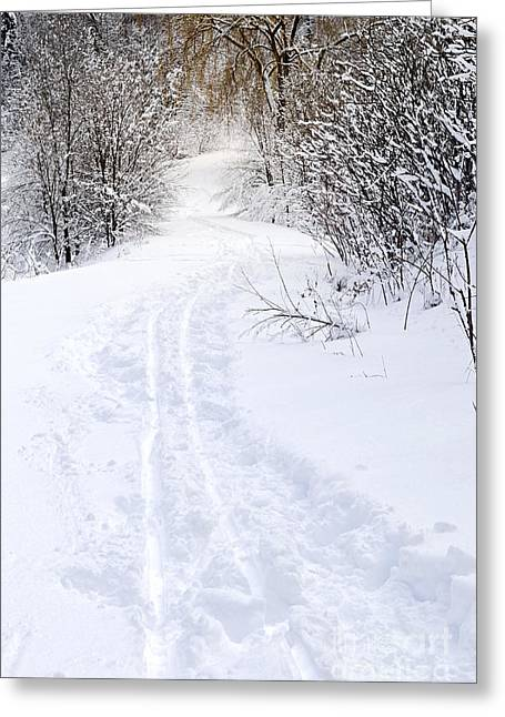 Path In Winter Forest Greeting Card by Elena Elisseeva