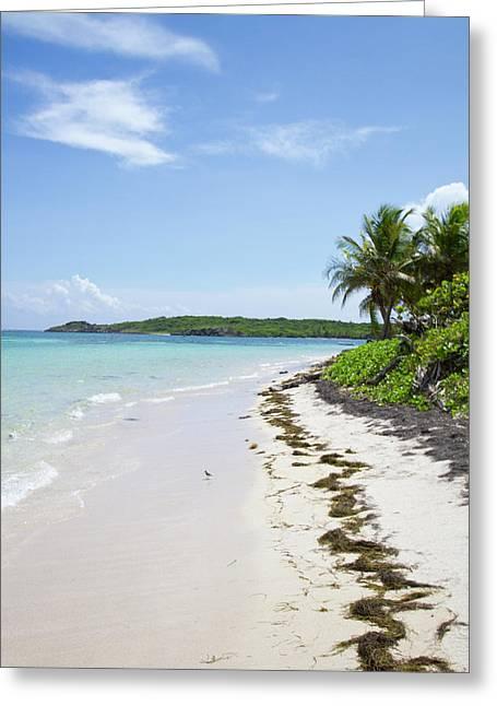 Perfect Paradise Beach With Palm Trees Greeting Card by Katia Singletary - Vwpics