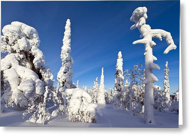 Pine Forest After Heavy Snowfall Greeting Card