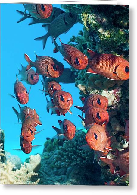 Pinecone Soldierfish Greeting Card by Georgette Douwma