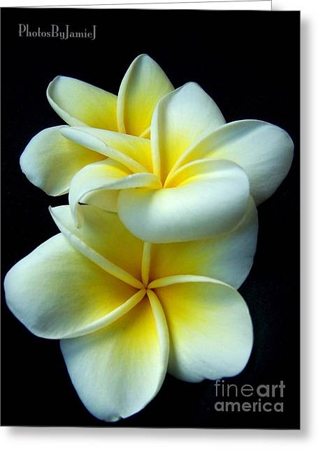 3 Plumerias Greeting Card