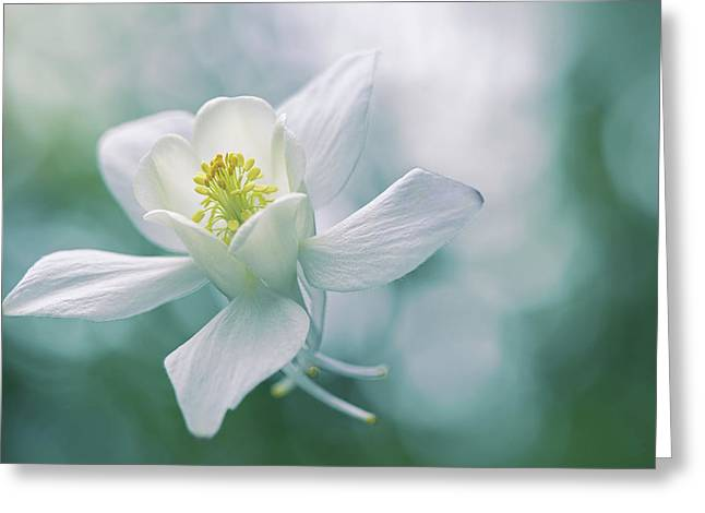 Purity Greeting Card by Jacky Parker