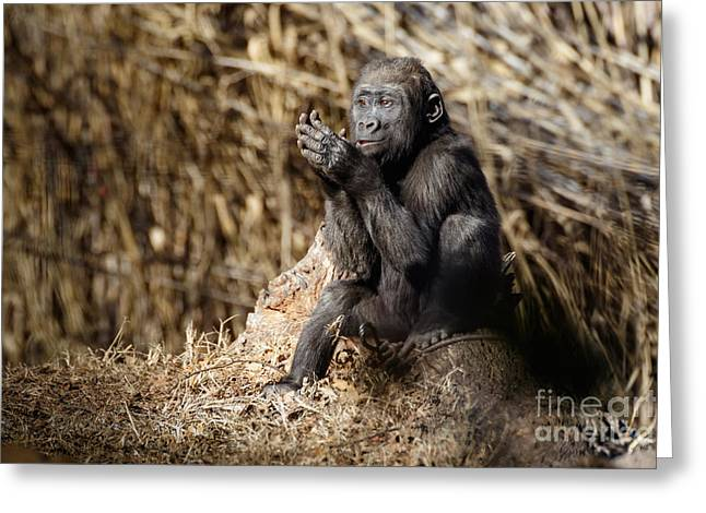 Quiet Juvenile Gorilla Greeting Card