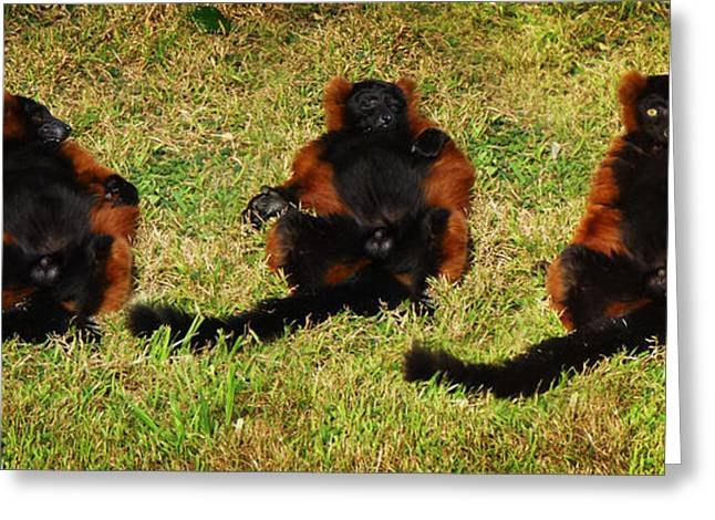 3 Red Ruffed Lemur Boys Greeting Card by Xueling Zou