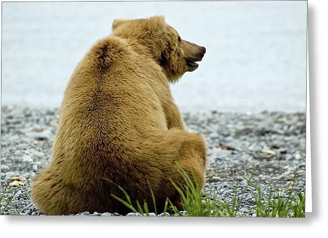 Resting Bear Greeting Card