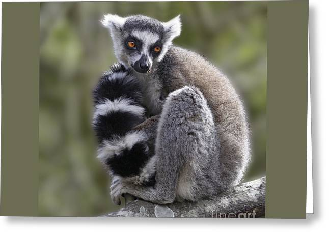 Ring-tailed Lemur Greeting Card by Liz Leyden