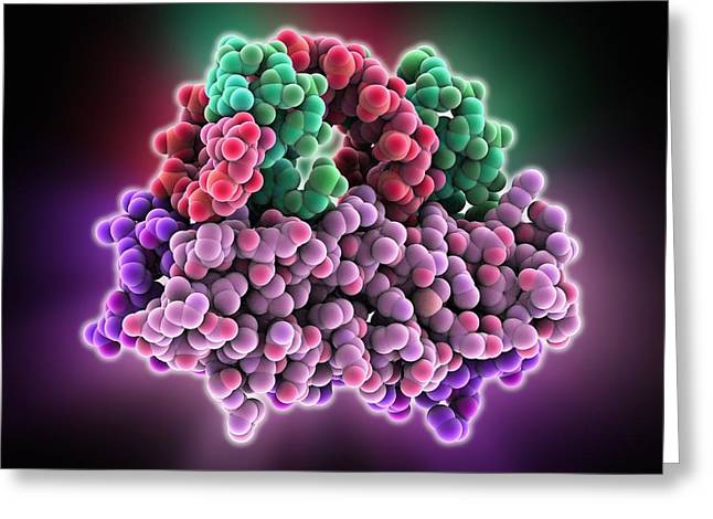 Rna Interference Viral Suppressor And Greeting Card by Science Photo Library