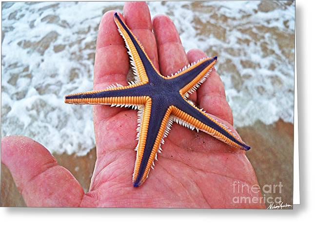 Royal Starfish - Ormond Beach Florida Greeting Card by Melissa Sherbon