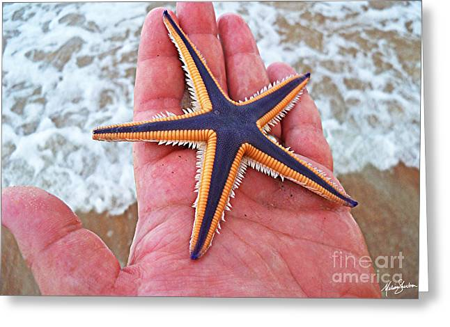 Royal Starfish - Ormond Beach Florida Greeting Card
