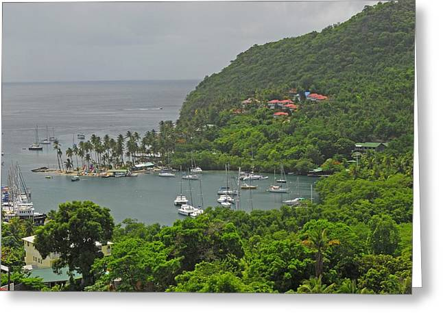 Saint Lucia Greeting Card by Willie Harper