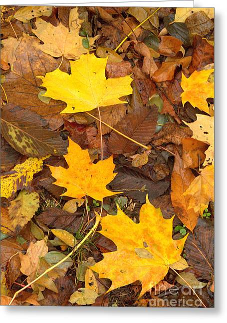 Greeting Card featuring the photograph 3 Shades Of Yellow by Jim McCain