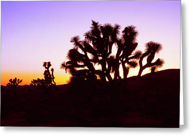 Silhouette Of Joshua Trees In A Desert Greeting Card