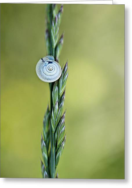 Snail On Grass Greeting Card