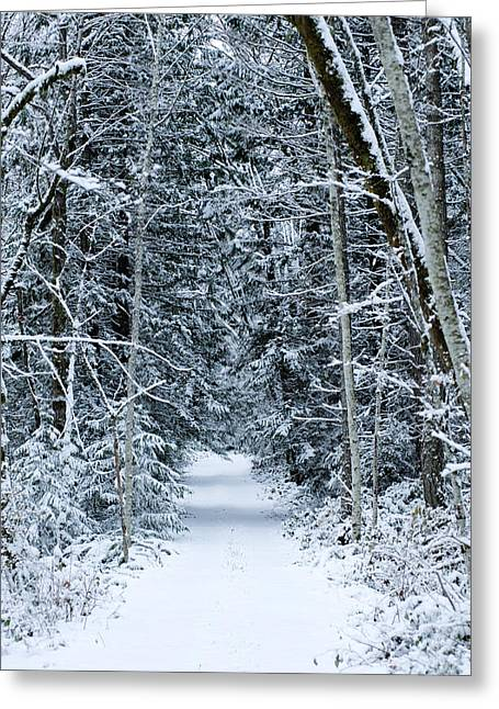 Snow Covered Road Passing Greeting Card by Panoramic Images