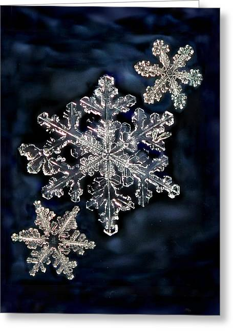 3 Snowflakes For The Price Of One Greeting Card by Lorella  Schoales