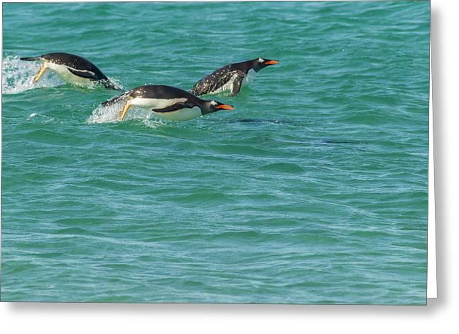 South America, Falkland Islands, Sea Greeting Card by Jaynes Gallery