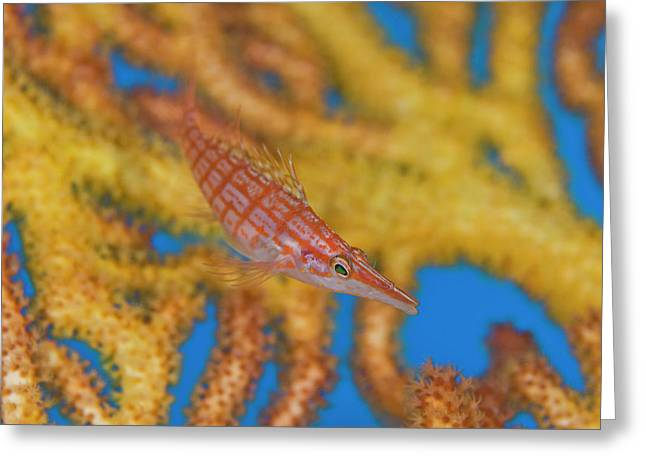 South Pacific, Solomon Islands Greeting Card