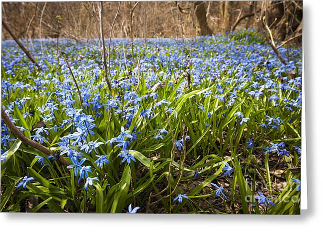 Spring Blue Flowers Greeting Card