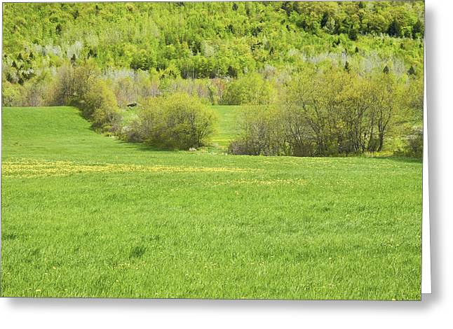 Spring Farm Landscape In Maine Greeting Card