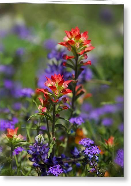 Spring Flowers  Greeting Card by Saija  Lehtonen