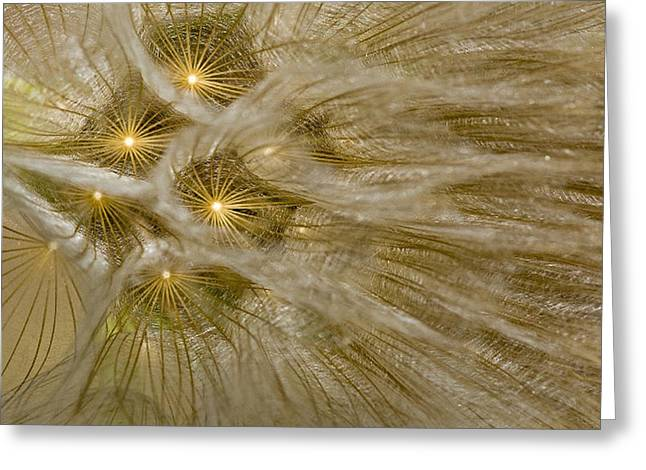 Spun Gold Greeting Card