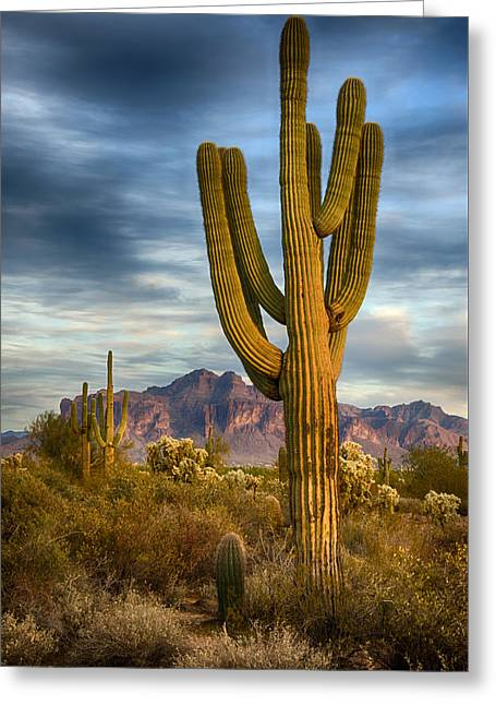 Standing Tall  Greeting Card by Saija  Lehtonen