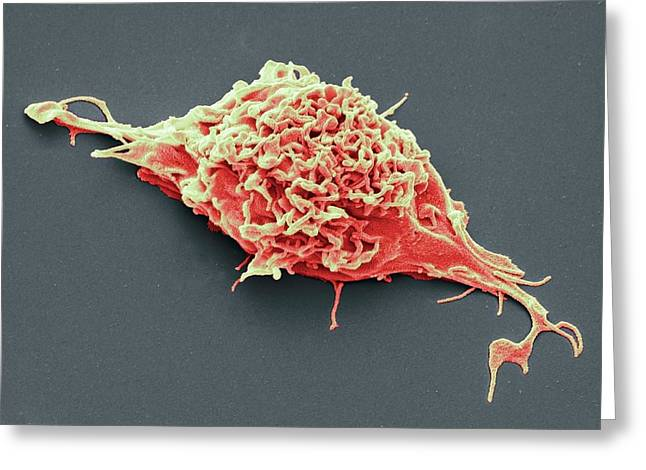 Stem Cell Greeting Card