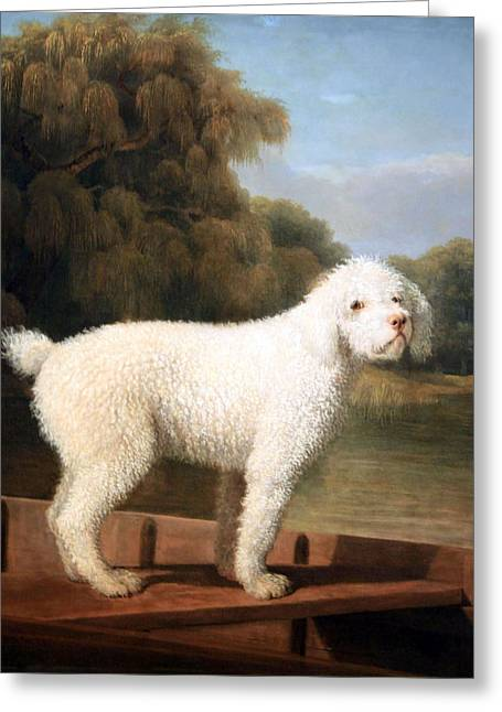 Stubbs' White Poodle In A Punt Greeting Card