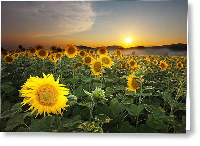Summer Morning Greeting Card by Mircea Costina Photography