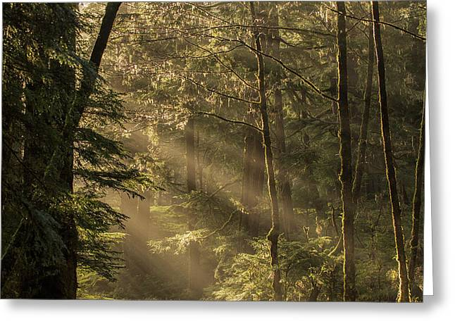 Sunlight Streams Through The Rainforest Greeting Card by Robert Postma
