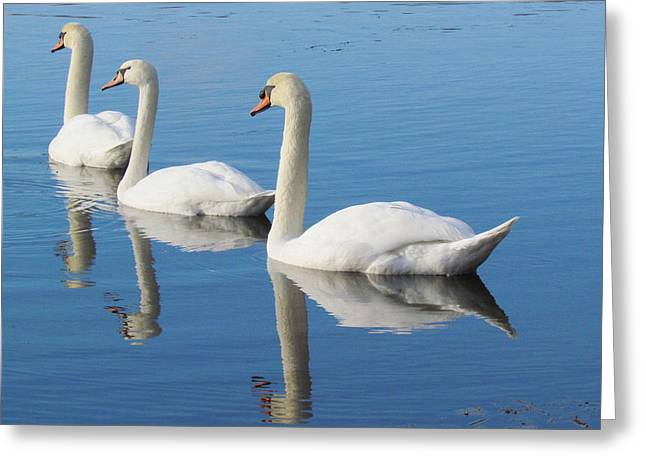 3 Swans A-swimming Greeting Card