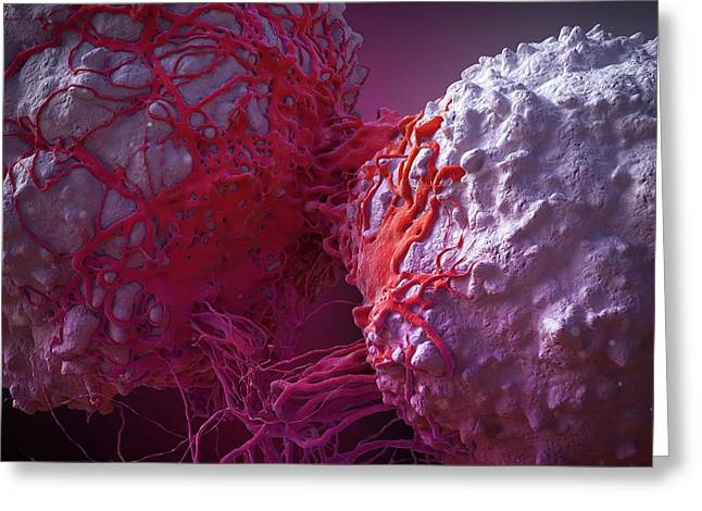T-lymphocytes Greeting Card by Maurizio De Angelis