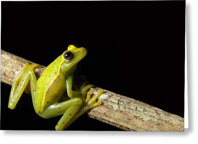 Kermit greeting cards page 3 of 9 fine art america tree frog m4hsunfo