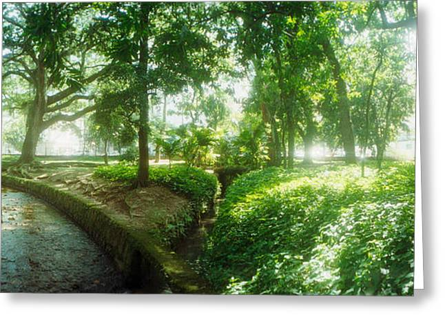Trees In A Botanical Garden, Jardim Greeting Card by Panoramic Images