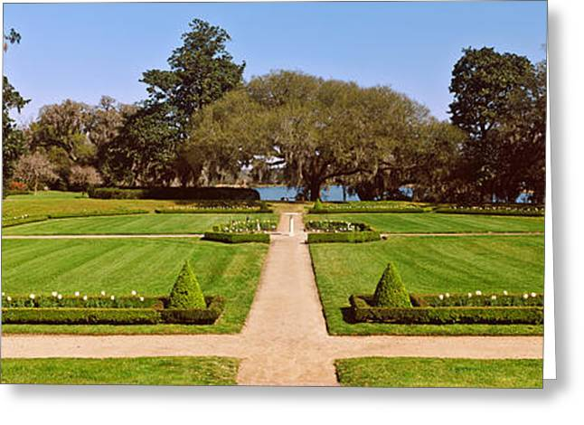 Trees In A Garden, Middleton Place Greeting Card