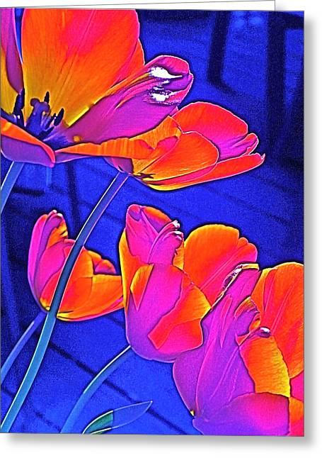 Tulip 4 Greeting Card by Pamela Cooper