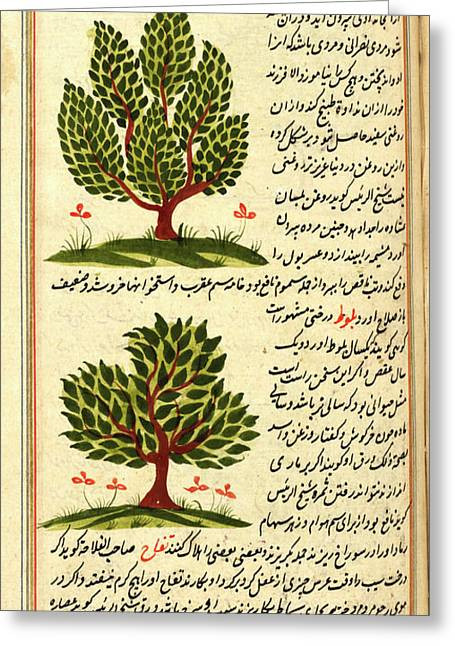 Two Trees Greeting Card by British Library