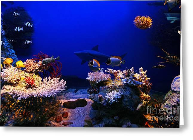 Underwater Scene Greeting Card by Michal Bednarek