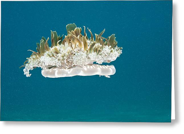 Upside-down Jelly Greeting Card by Andrew J. Martinez