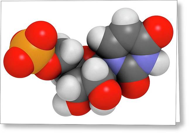 Uridine Monophosphate Nucleotide Molecule Greeting Card by Molekuul
