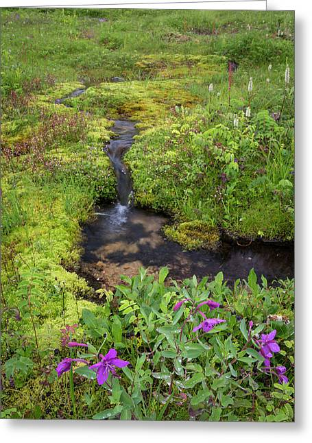 Usa, Alaska Upper Willow Creek Greeting Card