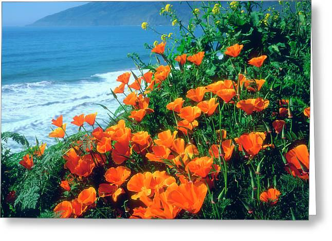 Usa, California, California Poppies Greeting Card by Jaynes Gallery