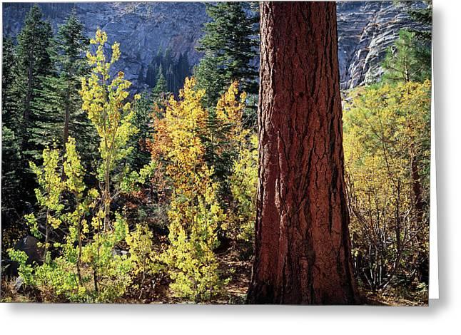Usa, California, Sierra Nevada Greeting Card by Christopher Talbot Frank